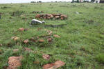 Gauteng, HEIDELBERG district, Vaaldam, Rietfontein 461, farm cemetery_2
