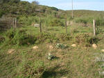 Western Cape, RIVERSDALE district, Albertinia, Valsch Riviers Mond 333, farm cemetery